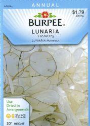 Burpee Money Plant Lunaria Seeds 100 seeds